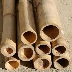 Canna di bambu 39 diam 08 10 cm punta verde for Prezzi bambu giganti