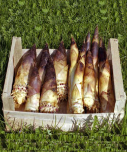 I germogli di bambù gigante sono sono ricchi di proteine, carboidrati, amminoacidi, fibre, vitamine e sali minerali.