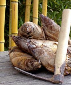Il sapore dei germogli di bambu gigante ricorda sia l'asparago che il carciofo, ma con una tonalità molto delicata