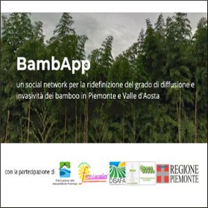 bambapp un social network per la diffusione dei bambu in piemonte