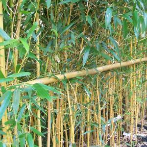 Stu tutore cannetta bambu 240cm 04 punta verde for Cannette di bambu prezzo